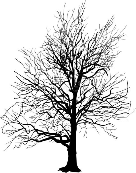 trees silhouettes stock illustration image of color 43384093 bare tree silhouette isolated on white stock vector illustration of single white 33122033