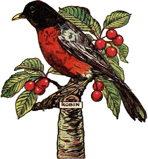 free clipart images free robin clip image with cherries the graphics