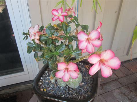 huntingtons ultimate plant sale  smarter gardener