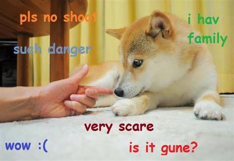 What Is Doge Meme - image doge meme shot 1 jpg animal jam clans wiki