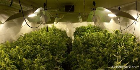 plants that grow in rooms ventilation for marijuana grow rooms alchimia