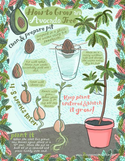 how do you start a in a pit 25 best ideas about growing avocado pits on