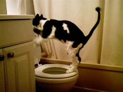 how to stop my dog pissing in the house my cat peeing in the toilet youtube