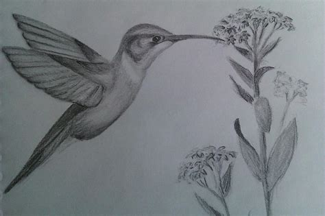 how to draw a hummingbird on a flower hummingbird totem drawing by carol frances arthur