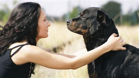 femme saute par chien angleterre une femme enceinte sauv 233 e par son chien