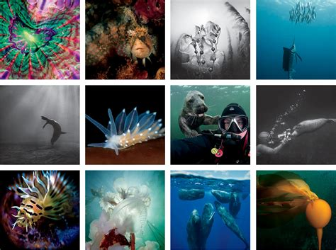 underwater photography book guest photographers gallery underwater photography book