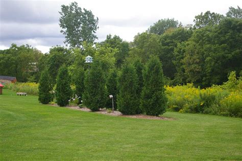green tree landscaping tips on landscaping with trees