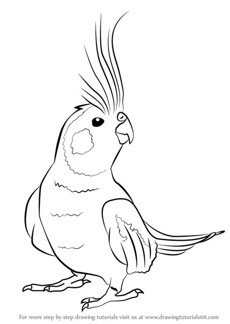 how to draw an i learn how to draw a cockatiel birds step by step