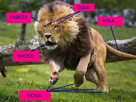 imagenes de un animal descubretucuerpoyjuega8 actividad 4