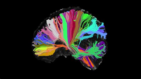 Moment Memory Brain our brains instantly make two copies of each memory