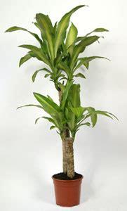 agréable Plante Interieur Peu De Lumiere #2: conseils-besoins-plantes-interieur-01.jpg