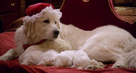 santa puppies santa paws 2 the santa pups 2012 review basementrejects