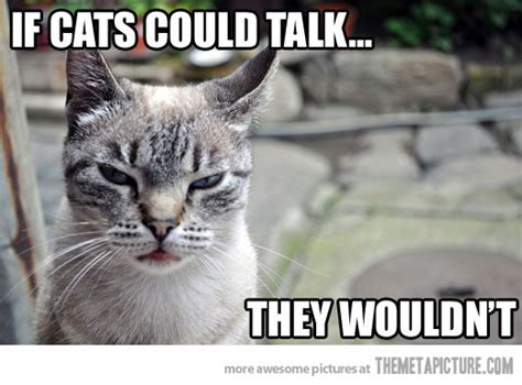 Cat Meme Pictures - pissed off cat memes image memes at relatably com