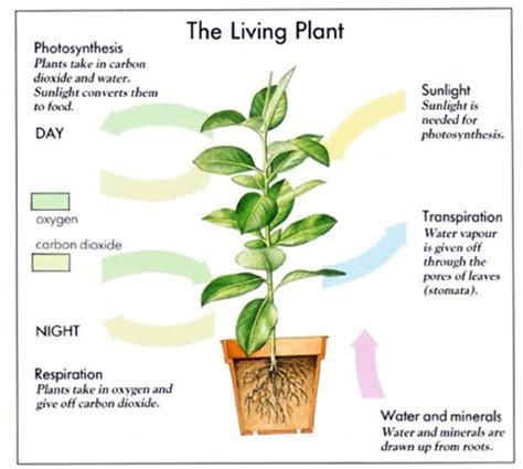 how do earthworms help plants grow k k club 2017