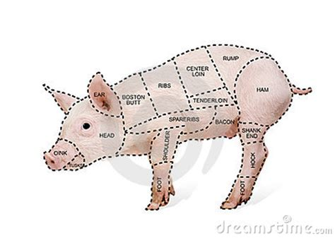 how to butcher a pig diagram butcher s pig chart stock photo image 9534610