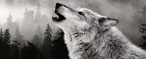 imagenes de animales naturales cient 237 ficos demuestran la capacidad de los animales de
