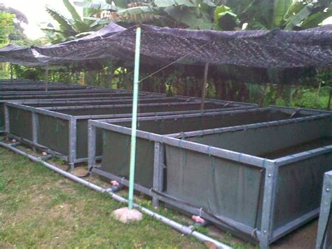 backyard catfish farming affnan s aquaponics catfish aquaculture