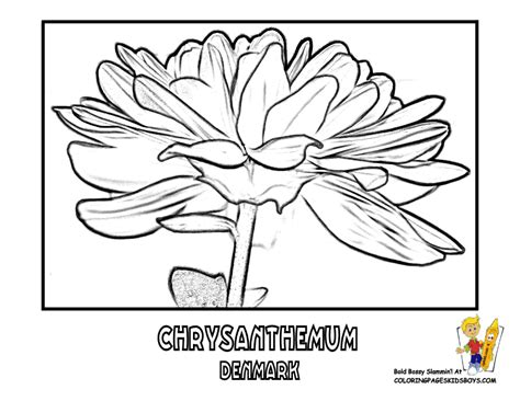 white chrysanthemum coloring page coloring pages