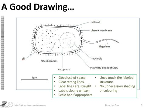 draw scale diagram a drawing http sciencevideos draw the