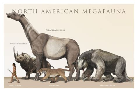 animal during great ice age namerica megafauna strange and bizarre history