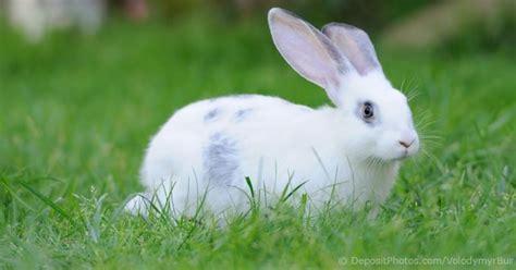 cost  keeping  rabbit