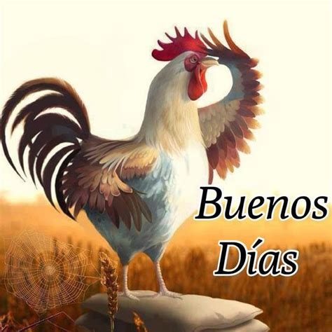 imagenes buenos dias te extraño imagen graciosa de un gallo que te da los buenos d 237 as