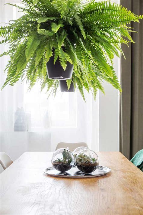 piante da tenere in casa le migliori piante da tenere in casa webcasa24 ch