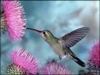 Flores Hermosas Para Fondo De Pantalla  Imagenes Bonitas