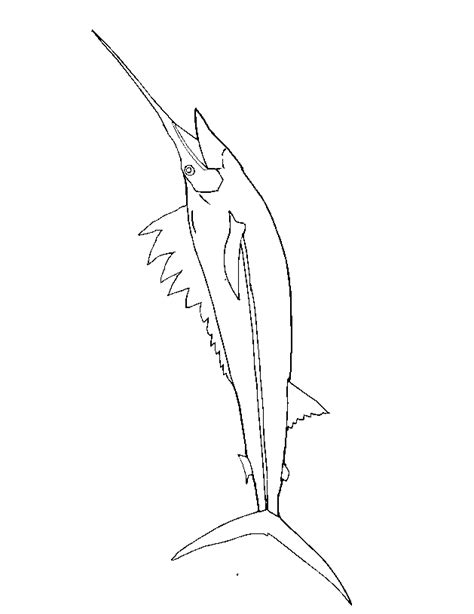 marlin fish coloring pages blue marlin fish coloring pages sketch coloring page