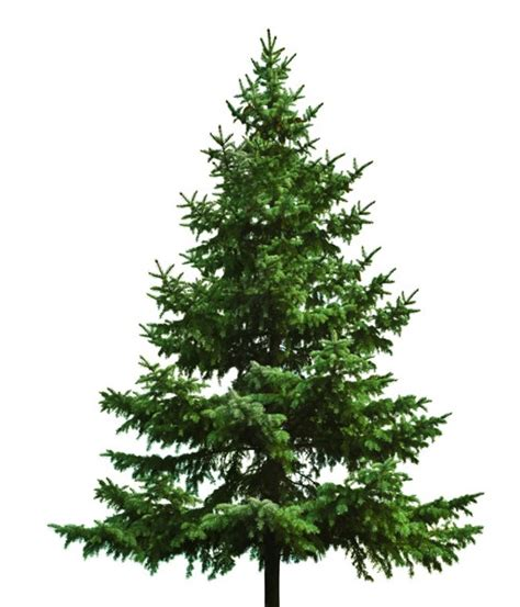 arboles de navidad diferentes para navidad para