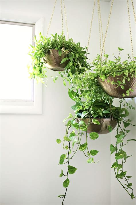 good plants for indoors hanging planters out of metal bowls love this click
