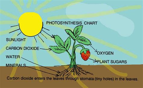science star overview of photosynthesis