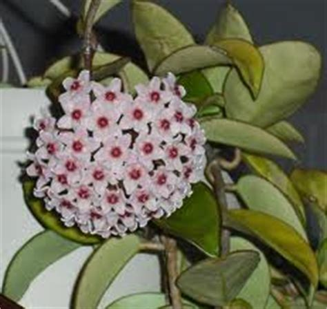 plants that do not need sunlight indoor flowering plants that do not need sunlight