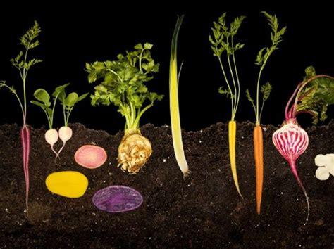 駘駑ents cuisine the modernists cuisine the and science of cooking