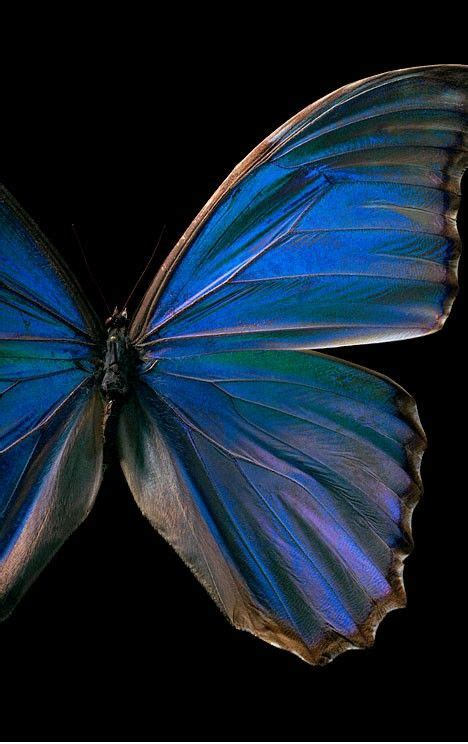 beautiful blue color pin by katharina thinnes on dark n handsome pinterest