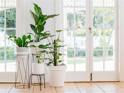 easy diy indoor garden tips  tricks