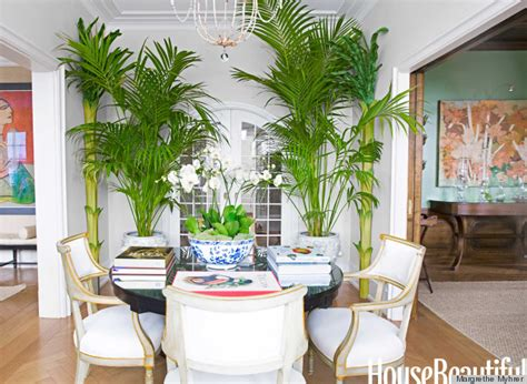 15 gorgeous phyto design ideas and indoor plants for nicolette horn interior designer brought the tropics to