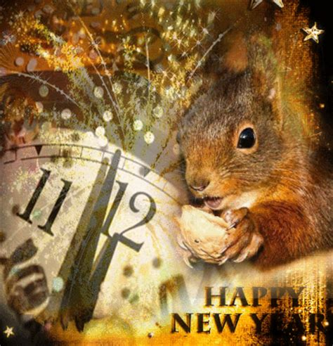 new year animals since 2000 squirrel squirrels new years 2011 picture