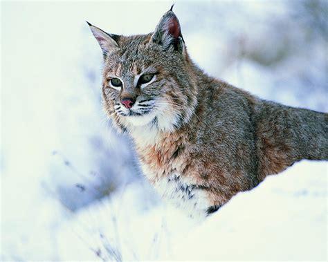 Места обитания животных картинки
