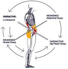 images  human anatomy joints  muscles  pinterest hip flexors   pain
