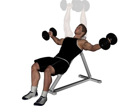 incline bench flyes image gallery incline dumbbell fly
