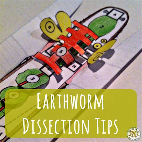 earthworm dissection lesson plan science lessons tips and tools for secondary classrooms