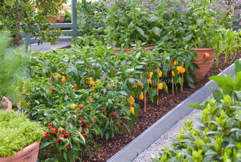 Plants In Kitchen beautiful vegetable gardens images png hi res 720p hd