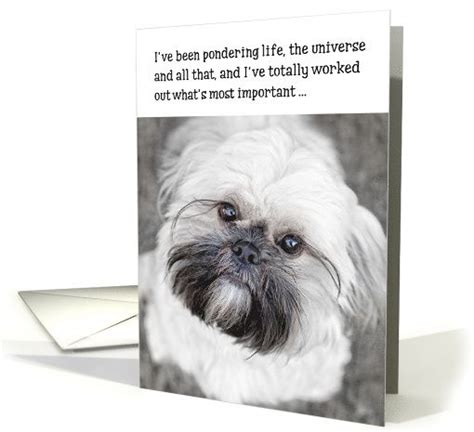 what s the lifespan of a shih tzu for dogs and texts on