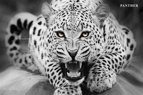 black and white leopard wallpaper custom canvas art leopard poster leopard animal wallpaper