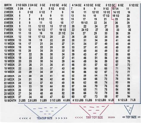 pitbull puppy growth chart doberman puppy weight chart goldenacresdogs