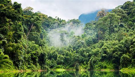 la selva selva amazonica gallery