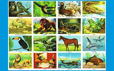 imagenes de animales vertebrados mamiferos animales vertebrados imagenes wallpapers laminas