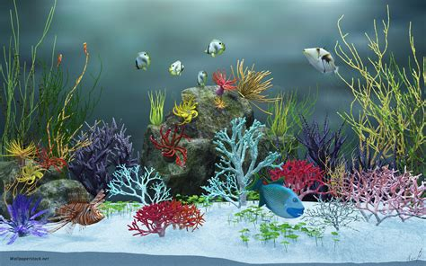 wallpaper aquarium mac 1920x1200 aquarium view ver 2 desktop pc and mac wallpaper