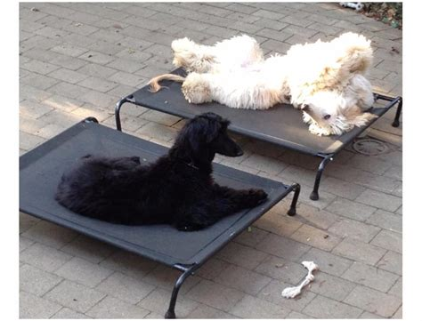 Hound Sleeper by Hound Sleeper Beds